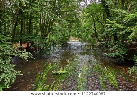 Belo rio Munique verde árvores paisagem Foto stock © meinzahn
