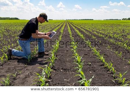 Agronomist with digital tablet computer in corn field Stock photo © stevanovicigor