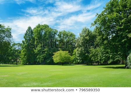 Groene glade bos groot stenen voorjaar Stockfoto © OleksandrO