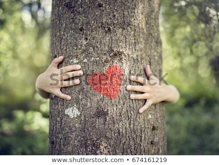 Natureza amor isolado tiro coração verde Foto stock © Fisher