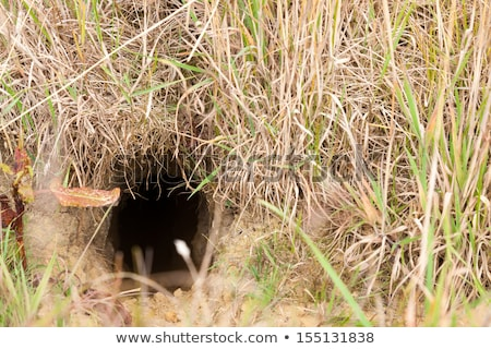 кролик заяц вход местный области Сток-фото © inxti