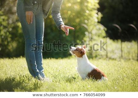trained dog Stock photo © adrenalina
