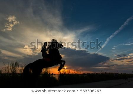 adam · at · siluet · gün · batımı · örnek - stok fotoğraf © adrenalina