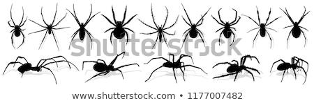 シルエット クモ 実例 黒 白 ストックフォト © bluering