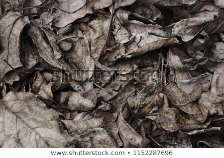 wyschnięcia · ziemi · streszczenie · jesienią · starych - zdjęcia stock © zurijeta