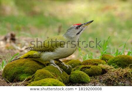 Természet zöld tél állat ág ül Stock fotó © papa1266