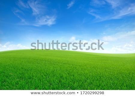 Stockfoto: Groene · weide · mooie · groen · gras · blauwe · hemel · hemel