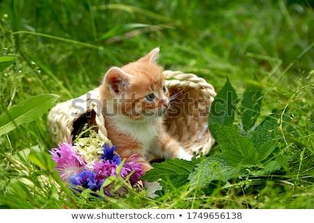 Kicsi piros macska fonott kosár zöld Stock fotó © Yatsenko
