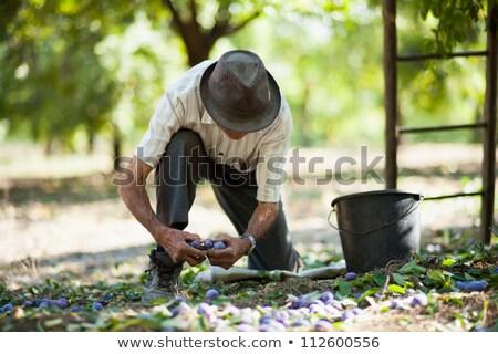 старик садоводства лестнице природы саду обуви Сток-фото © IS2