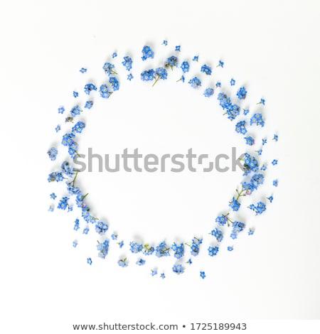 Blue flower wreath Stock photo © PurpleBird