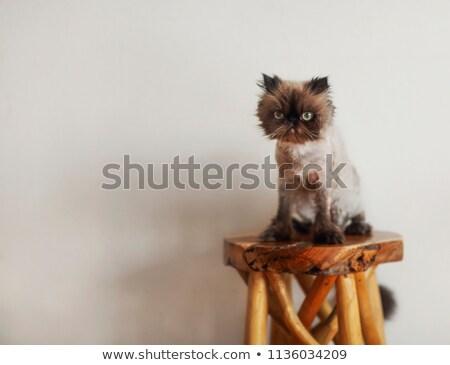 猫 · バナー · 足 · 笑顔 · 青 · 面白い - ストックフォト © dashapetrenko