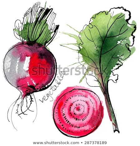 Purple Vector Beet Isolated on White Background Stock photo © robuart