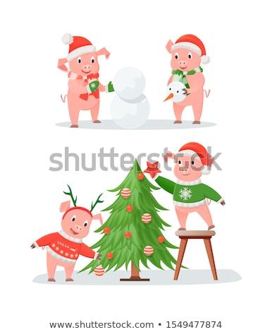 Ano novo porco casais árvore de natal boneco de neve porcos Foto stock © robuart