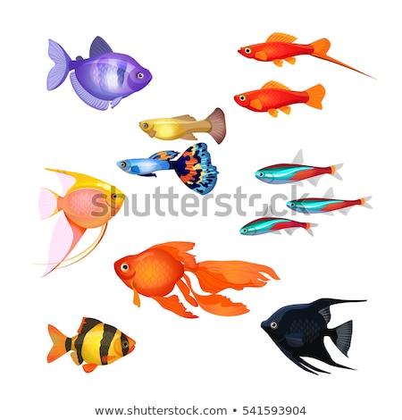 Fish of Purple Color Marine Vector Illustration Stock photo © robuart