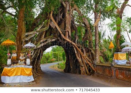 Huge tree with roots of the balinese temple Stock photo © galitskaya
