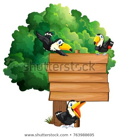 ptaków · lasu · ptaków · Pióro · czerwony - zdjęcia stock © colematt