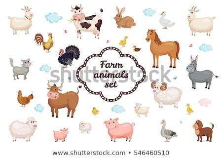 Set of farm animal in nature Stock photo © colematt