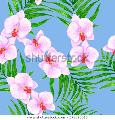 Blanche orchidée fleur fleurir résumé floral Photo stock © Anneleven