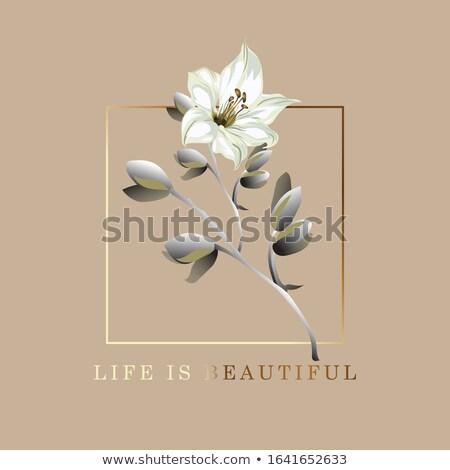 Vida belo cartão postal cartaz lírio flor Foto stock © ikopylov