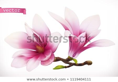 Kolory różowy magnolia kwiat Zdjęcia stock © ElenaBatkova