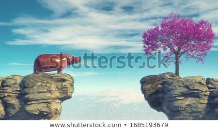 hippopotamus peak  Stock photo © orla