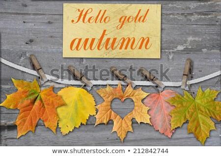 Autumn sheet on clothes-peg Stock photo © RuslanOmega