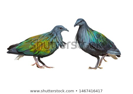 Pigeon branche profile nature vert Photo stock © Musat