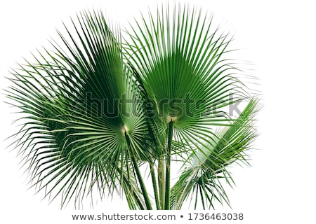 Stockfoto: Palmblad · groene · abstract · achtergrond · leven