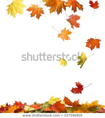 sonbahar · yaprakları · çerçeve · ahşap · yaprak · arka · plan · turuncu - stok fotoğraf © premiere