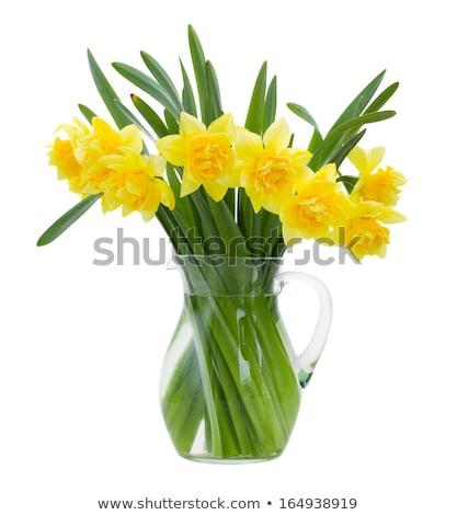 Daffodil (Narcissus pseudonarcissus) Stock photo © rbiedermann