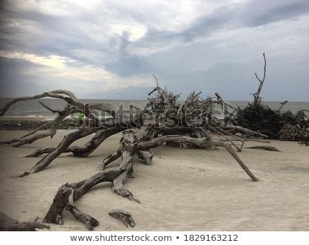 ぬれた · 湖 · 水生の · 植生 · 空 · 水 - ストックフォト © gregory21