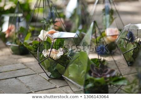fleur · blanche · bouquet · coloré · fleurs - photo stock © 3523studio