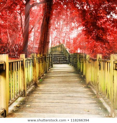 Taş merdiven düşmek merdiven yosun kapalı Stok fotoğraf © saje
