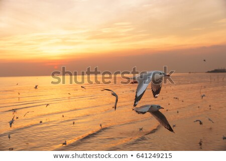 seagulls at low tide stock photo © arenacreative