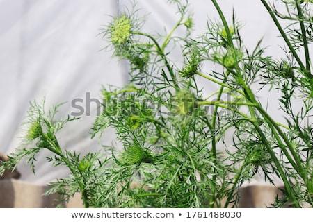 Megnőtt föld virág kert mezőgazdaság zöldség Stock fotó © inxti