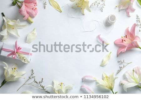 beautiful lily with white pink petals stock photo © pilgrimego