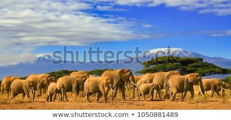 Kenya paysage pic herbe bleu Afrique Photo stock © Gbuglok