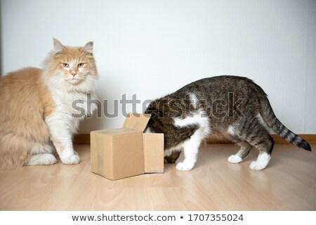 curious animals Stock photo © willeecole