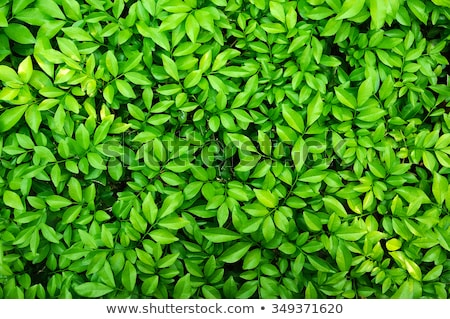 Stock photo: Bright Green Leaves