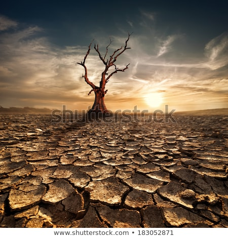 Desert landscape under the sunset colors Stock photo © broker