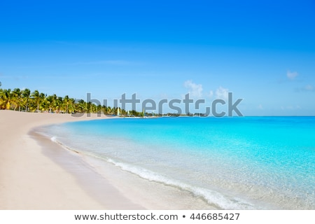 florida keys tropical palm trees turquoise sea blue sky stock photo © lunamarina