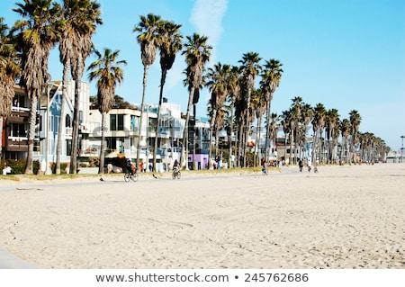Kaliforniya · palmiye · ağaçları · görmek · altında · plaj - stok fotoğraf © lunamarina