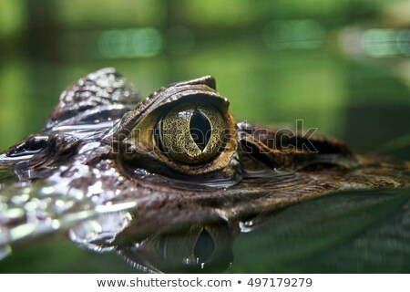 lagarto · grama · verde · árvore · natureza · fundo - foto stock © pxhidalgo