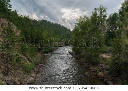 Foto stock: Corrida · rio · rápido · água · floresta · natureza