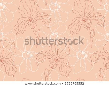 Boceto iris vector vintage eps Foto stock © kali