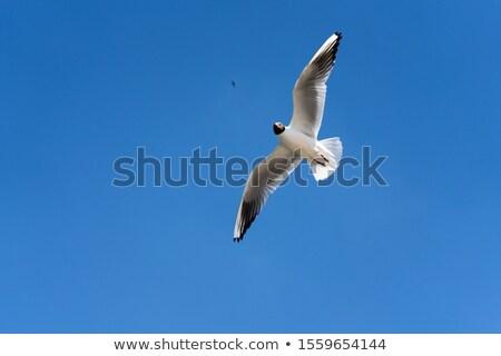 Meeuwen blauwe hemel vliegen vogels zon zee Stockfoto © ultrapro