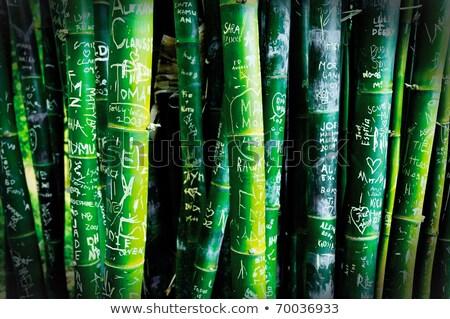 Bambu grafite árvores coberto grupo Foto stock © LAMeeks