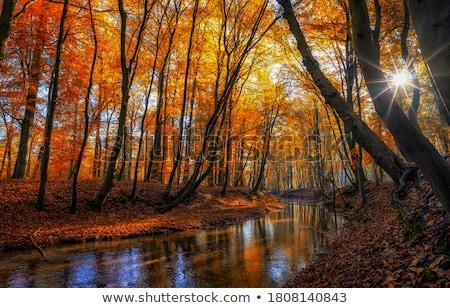 Kreek kleur reflectie bos achtergrond Stockfoto © meinzahn