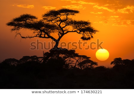solitário · árvore · madrugada · colorido · luz · campo - foto stock © master1305