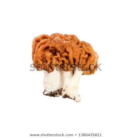 Vals champignon gras bos natuur Stockfoto © olandsfokus